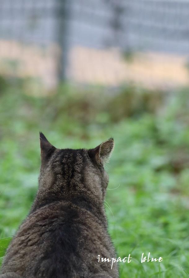 河川敷公園の猫ちゃん(^^)/_a0355908_11320793.jpg