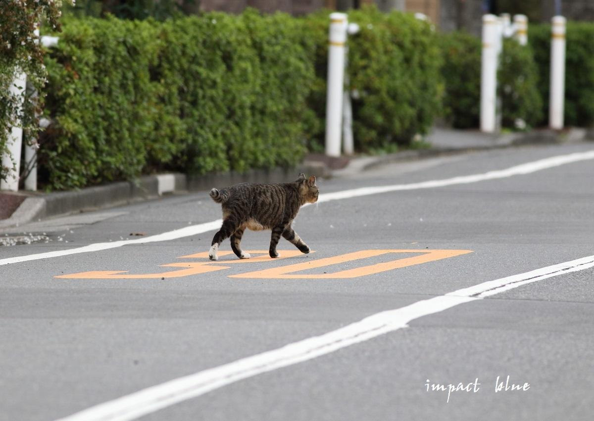 河川敷公園の猫ちゃん(^^)/_a0355908_11321697.jpg