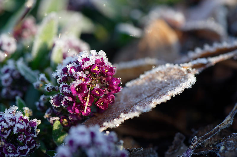 霜が降りた朝@梅小路公園_f0032011_09331093.jpg