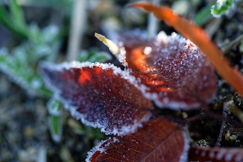 霜が降りた朝@梅小路公園_f0032011_09331137.jpg