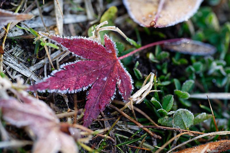 霜が降りた朝@梅小路公園_f0032011_09331168.jpg