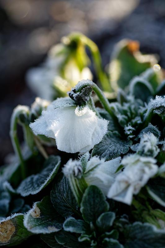 霜が降りた朝@梅小路公園_f0032011_09363018.jpg