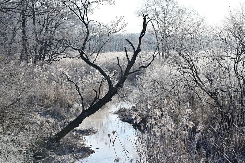 今朝の美沢湿原 2020シーズン・2_a0145819_2037397.jpg