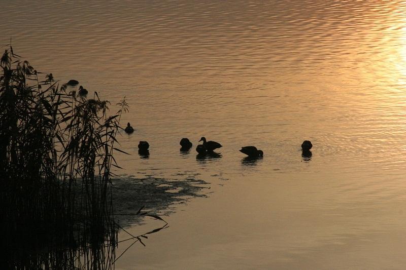 早朝の湖畔_b0230131_13393617.jpg