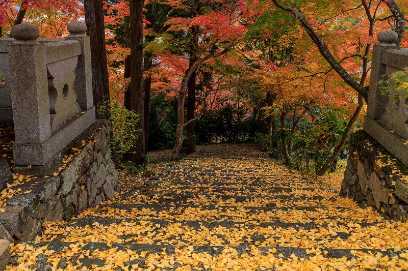 紅葉が彩る京都2019 和束の山寺にて_f0155048_2320306.jpg