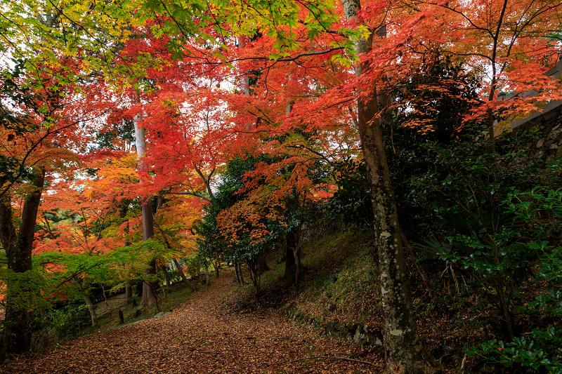 紅葉が彩る京都2019 和束の山寺にて_f0155048_2331687.jpg