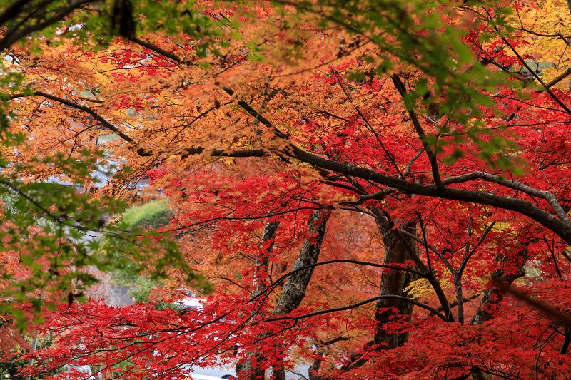 紅葉が彩る京都2019 和束の山寺にて_f0155048_2331839.jpg