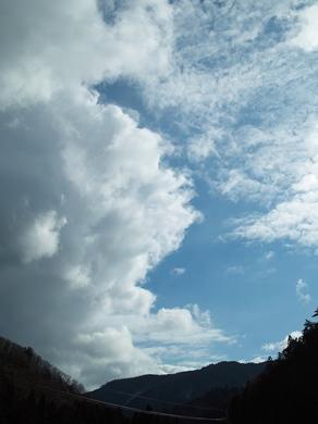 カステラとアカゲラ・・・雪がある時、ない時_d0005250_17291453.jpg