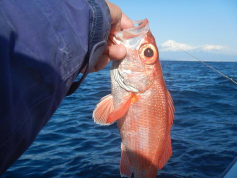 初漁は新年小吉!!_f0175450_8342696.jpg