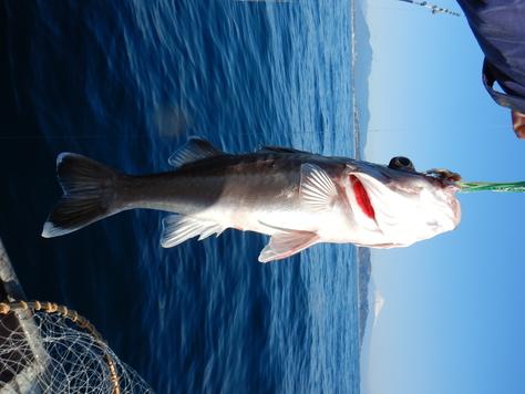 初漁は新年小吉!!_f0175450_8373627.jpg