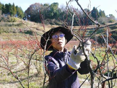 フレッシュブルーベリー 大きくて美味しい果実を実らせるために!枯れ枝剪定と冬の剪定作業の様子_a0254656_16384696.jpg