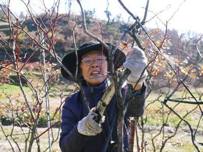 フレッシュブルーベリー 大きくて美味しい果実を実らせるために!枯れ枝剪定と冬の剪定作業の様子_a0254656_16520150.jpg