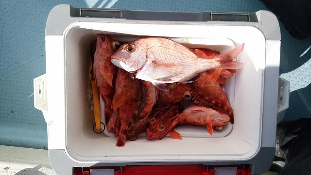 正月休みに遊漁船に乗り鯛釣りに行く_a0278866_1451416.jpg
