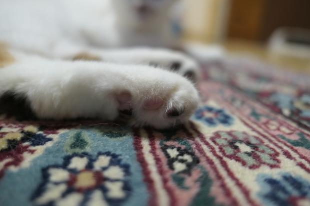 猫、、、について、、、_d0193569_09003232.jpg