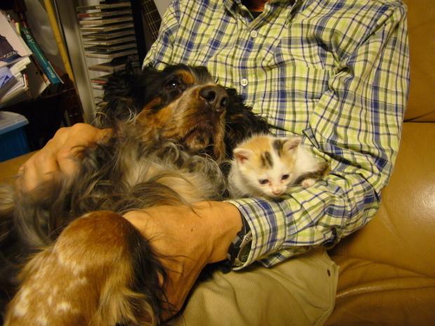 猫、、、について、、、_d0193569_09003677.jpg