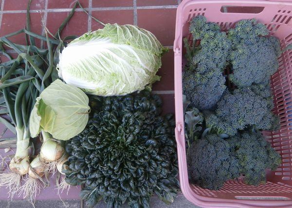 玉葱の初収穫&冬の収穫あれこれ_f0018078_16003270.jpg