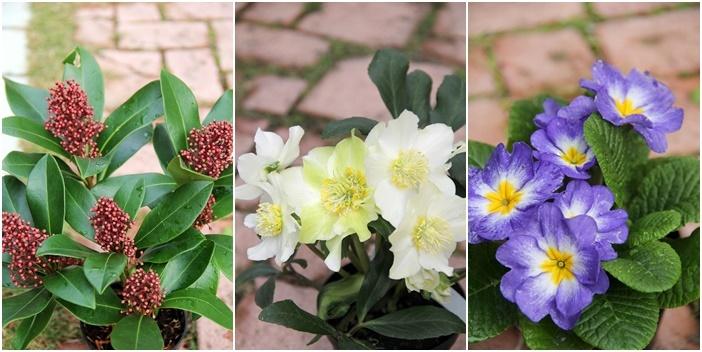◆松飾りの寄せ植え作り_e0154682_23013160.jpg