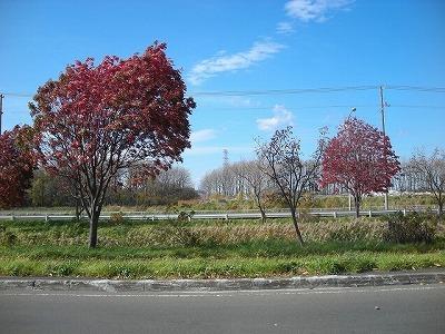 北屯田の公園と遊歩道を歩く(1)_f0078286_20103123.jpg
