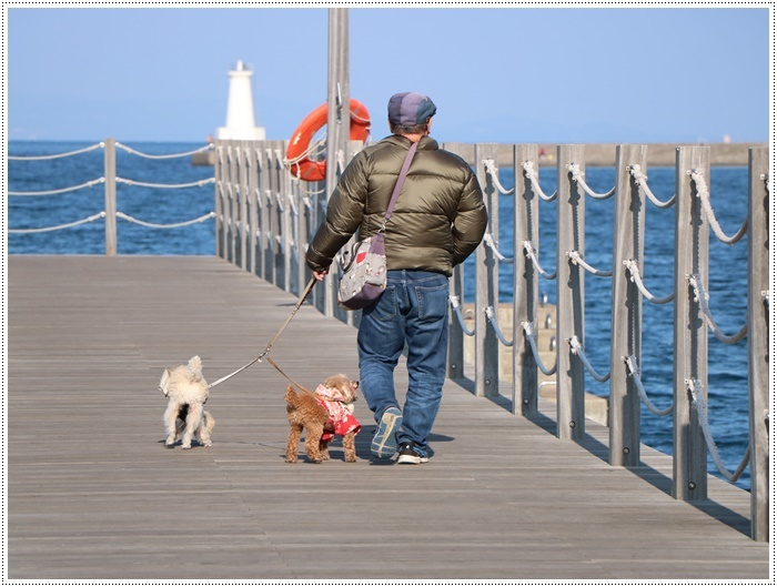 2020年、初めてのかんたん港園も、静かで穏やかで暖かで。。。良いお散歩スタートができました。_b0175688_21090492.jpg