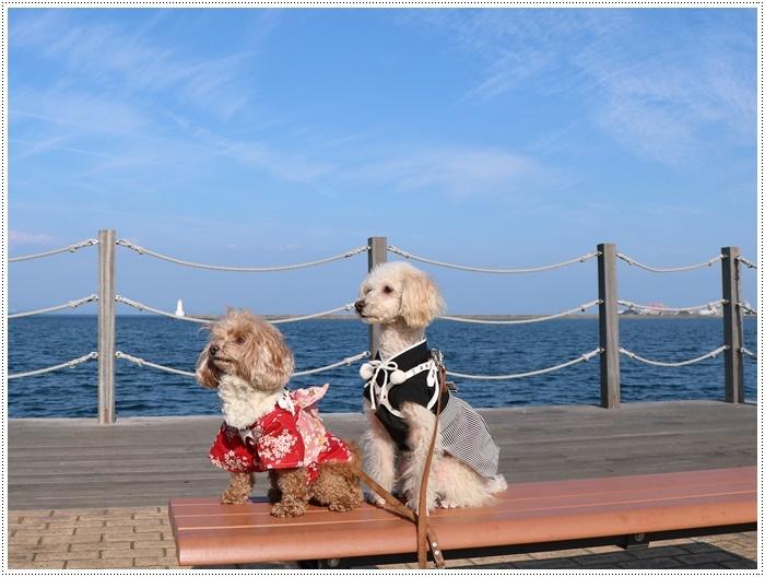 2020年、初めてのかんたん港園も、静かで穏やかで暖かで。。。良いお散歩スタートができました。_b0175688_21091016.jpg
