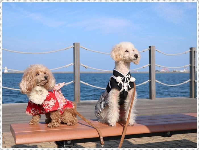 2020年、初めてのかんたん港園も、静かで穏やかで暖かで。。。良いお散歩スタートができました。_b0175688_21091360.jpg