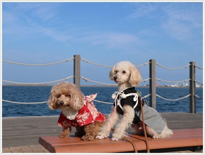 2020年、初めてのかんたん港園も、静かで穏やかで暖かで。。。良いお散歩スタートができました。_b0175688_21101291.jpg