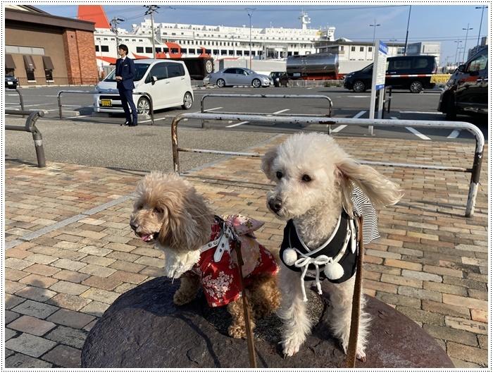 2020年、初めてのかんたん港園も、静かで穏やかで暖かで。。。良いお散歩スタートができました。_b0175688_21114083.jpg