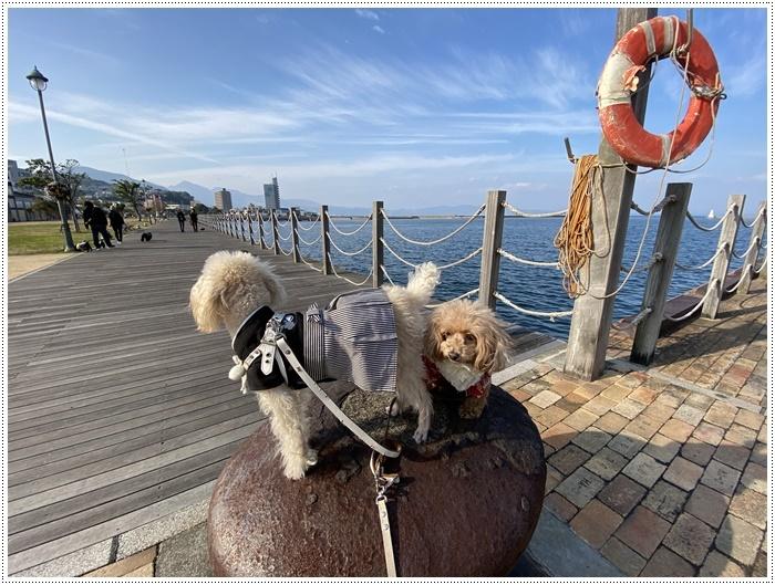 2020年、初めてのかんたん港園も、静かで穏やかで暖かで。。。良いお散歩スタートができました。_b0175688_21114511.jpg