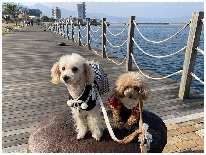 2020年、初めてのかんたん港園も、静かで穏やかで暖かで。。。良いお散歩スタートができました。_b0175688_21115229.jpg
