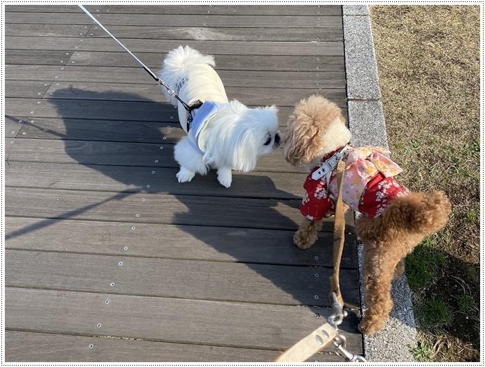 2020年、初めてのかんたん港園も、静かで穏やかで暖かで。。。良いお散歩スタートができました。_b0175688_21115721.jpg