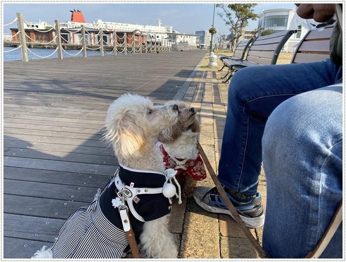 2020年、初めてのかんたん港園も、静かで穏やかで暖かで。。。良いお散歩スタートができました。_b0175688_21120608.jpg