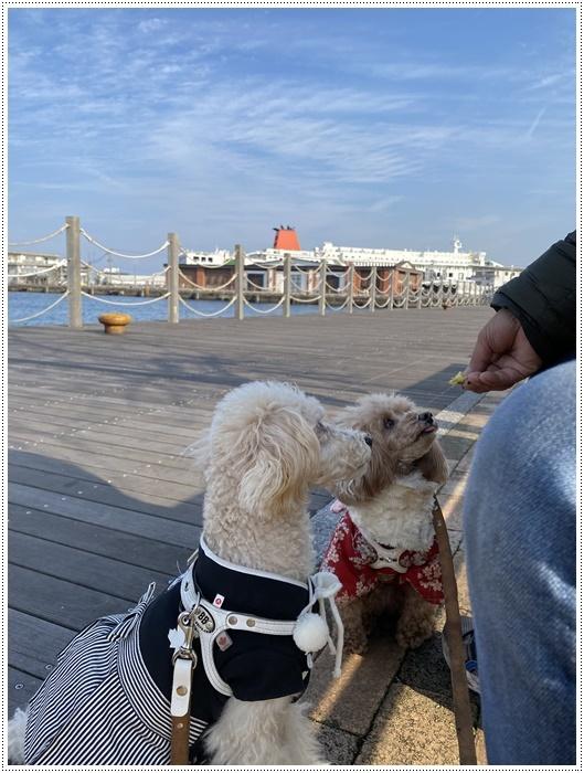 2020年、初めてのかんたん港園も、静かで穏やかで暖かで。。。良いお散歩スタートができました。_b0175688_21121117.jpg