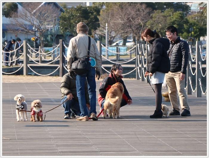 2020年、初めてのかんたん港園も、静かで穏やかで暖かで。。。良いお散歩スタートができました。_b0175688_21161099.jpg