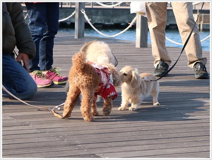 2020年、初めてのかんたん港園も、静かで穏やかで暖かで。。。良いお散歩スタートができました。_b0175688_21161359.jpg