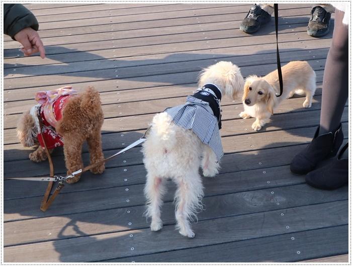 2020年、初めてのかんたん港園も、静かで穏やかで暖かで。。。良いお散歩スタートができました。_b0175688_21161743.jpg