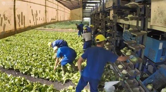 ③ 4.8 収穫工程の明確化_b0391989_08500995.jpg