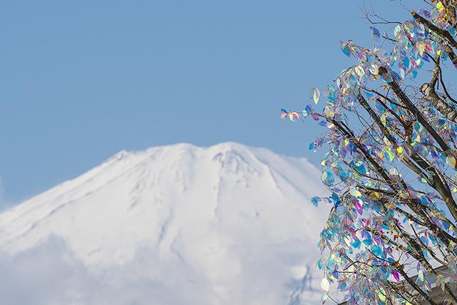 御殿場プレミアム・アウトレットのクリスマスツリー_b0145398_18232161.jpg