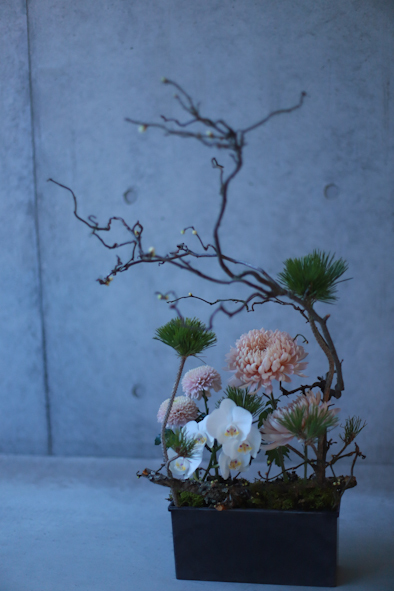 迎春の花_b0208604_21000702.jpg