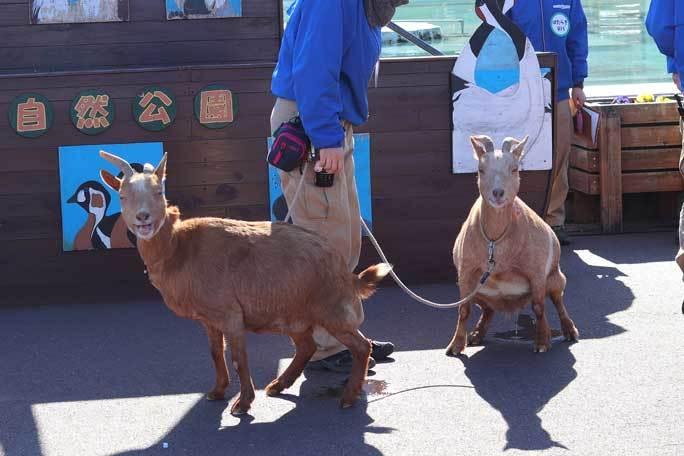 新春!動物パレード2020(埼玉県こども動物自然公園)その1_b0355317_21212096.jpg