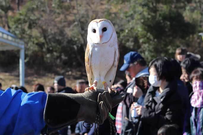 新春!動物パレード2020(埼玉県こども動物自然公園)その1_b0355317_21304814.jpg