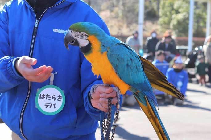 新春!動物パレード2020(埼玉県こども動物自然公園)その1_b0355317_21530612.jpg