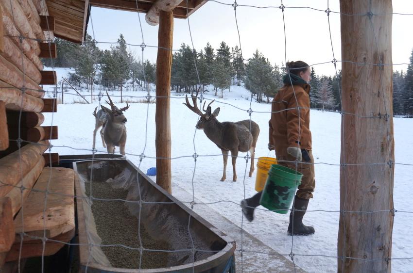 極寒の中生きる動物を見に行こう!ミート・ザ・ワイルド_d0112928_03570240.jpg