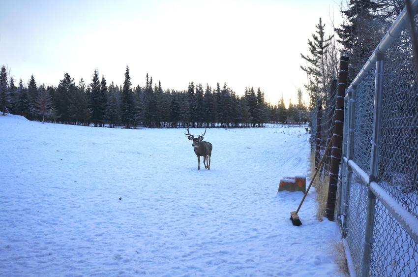 極寒の中生きる動物を見に行こう!ミート・ザ・ワイルド_d0112928_03573743.jpg