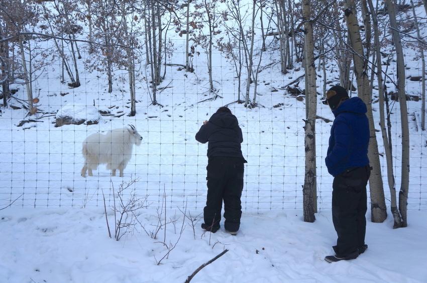 極寒の中生きる動物を見に行こう!ミート・ザ・ワイルド_d0112928_04004137.jpg