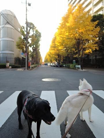 散歩屋日誌【29】_c0062832_14555827.jpg