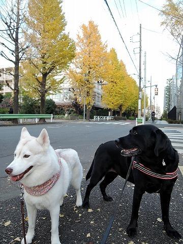 散歩屋日誌【29】_c0062832_14555832.jpg