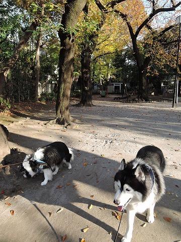 散歩屋日誌【29】_c0062832_14555850.jpg