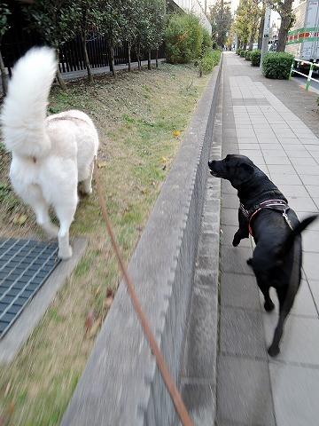 散歩屋日誌【29】_c0062832_14555855.jpg