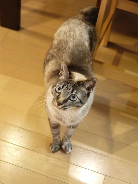 猫のお留守番 ルノーちゃん編。_a0143140_22412059.jpg
