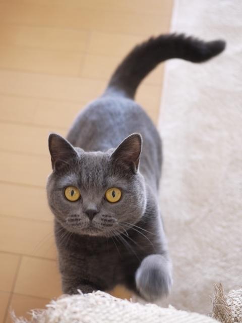 猫のお留守番 ちゃちゃちゃん編。_a0143140_22454932.jpg